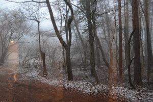 朝靄2.JPGのサムネール画像