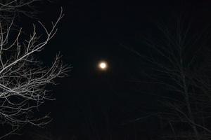 睦月の月.JPGのサムネール画像