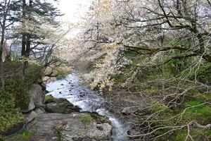 湯川2.JPGのサムネール画像