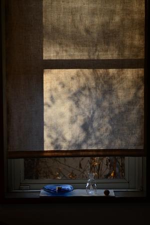 陽光.JPGのサムネール画像
