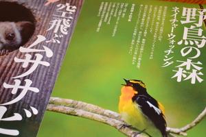 野鳥の森.JPG