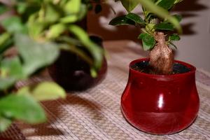 赤い鉢.JPGのサムネール画像