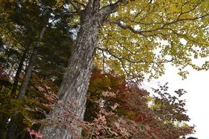 白駒池8.JPGのサムネール画像のサムネール画像のサムネール画像のサムネール画像
